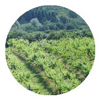 Other Wine & Vineyard Services