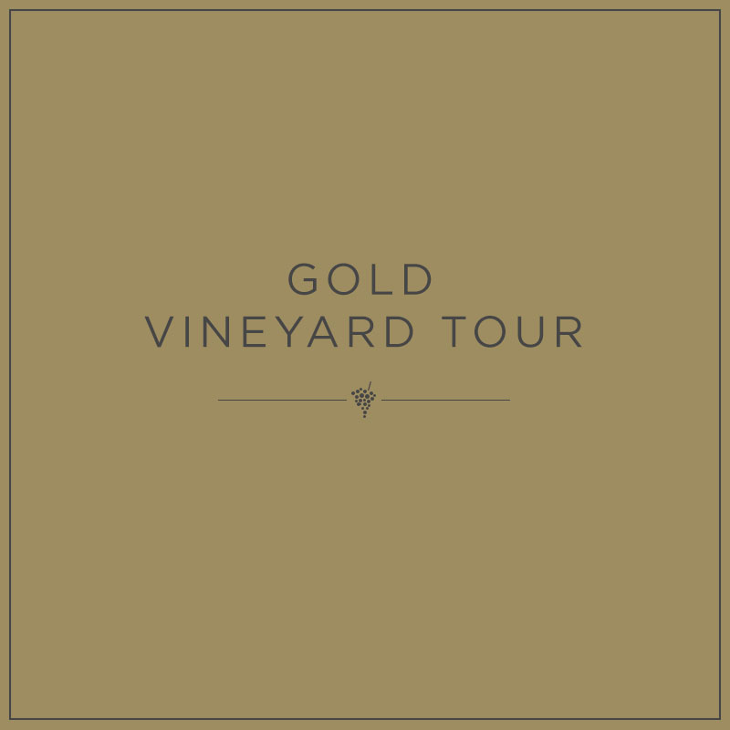Gold Vineyard Tour